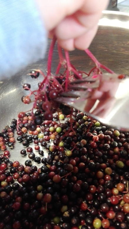 removing elderberries with a fork in to a bowl